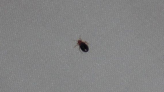 A bed bug found by our team after the customer wanted our talented staff to fix an issue